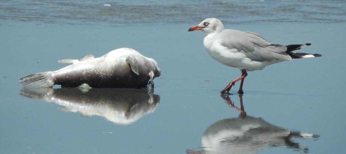 Birdlife Gambia
