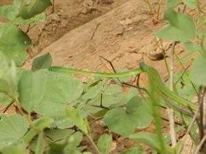Snake Farm Gambia