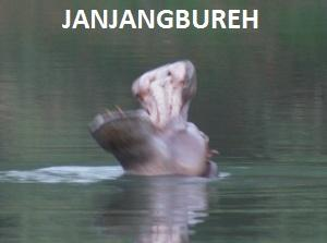 JANJANGBUREH