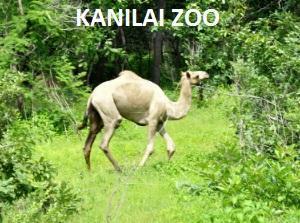 KANILAI ZOO