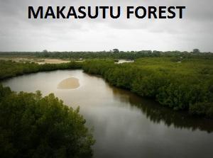 MAKASUTU FOREST